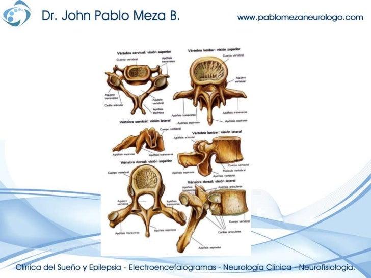 Los dolores en el campo del cuello detrás a que médico