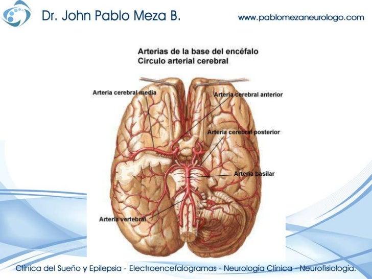 Neuroanatomia anatomia del encefalo