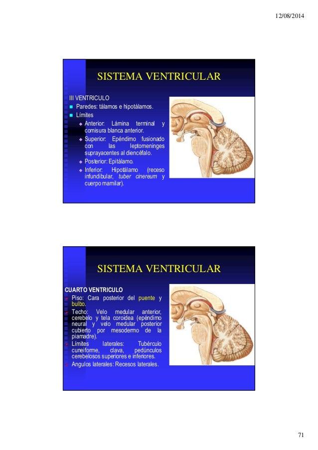 Perfecto Lateral Anatomía Síndrome Medular Molde - Imágenes de ...