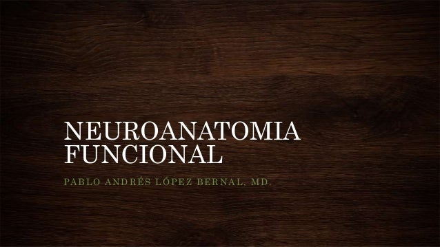 NEUROANATOMIA FUNCIONAL PABLO ANDRÉS LÓPEZ BERNAL, MD.