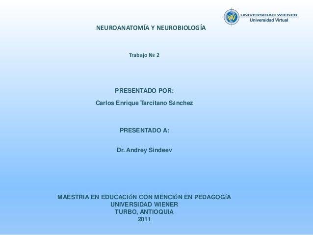 NEUROANATOMÍA Y NEUROBIOLOGÍA                    Trabajo № 2                PRESENTADO POR:          Carlos Enrique Tarcit...