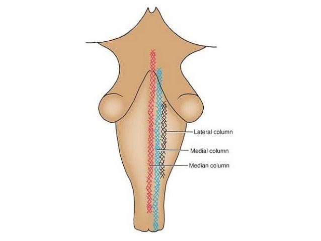 Basal Ganglia, Reticular Formation, Limbic System