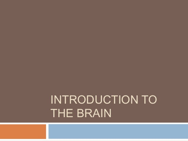 neuroanatomy through clinical cases pdf download