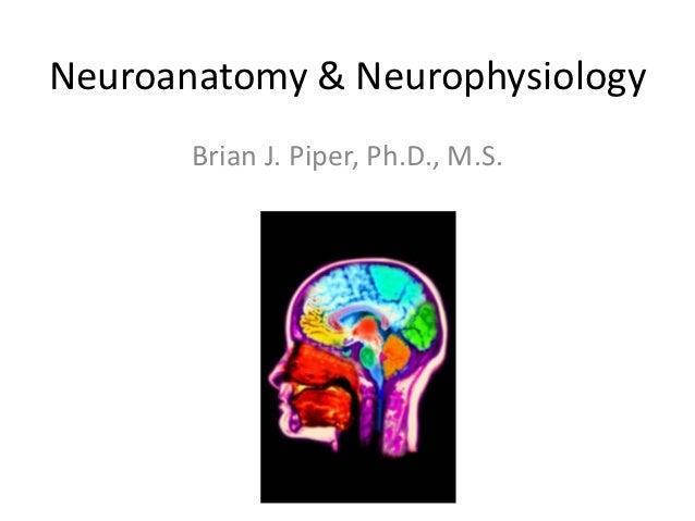 Neuroanatomy & Neurophysiology       Brian J. Piper, Ph.D., M.S.