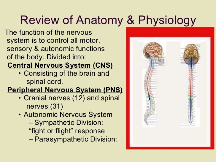 Review of Anatomy & Physiology <ul><li>The function of the nervous  </li></ul><ul><li>system is to control all motor,  </l...