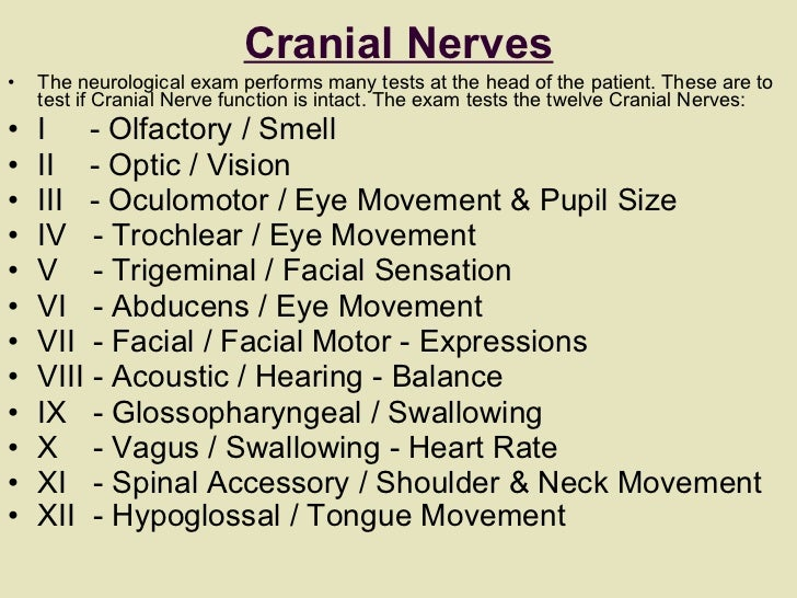 Cranial Nerves <ul><li>The neurological exam performs many tests at the head of the patient. These are to test if Cranial ...