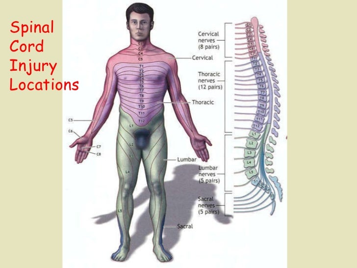 Spinal  Cord  Injury Locations