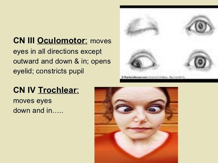 <ul><li>  </li></ul><ul><li>CN III  Oculomotor :   moves    </li></ul><ul><li>eyes in all directions except     </li></ul>...