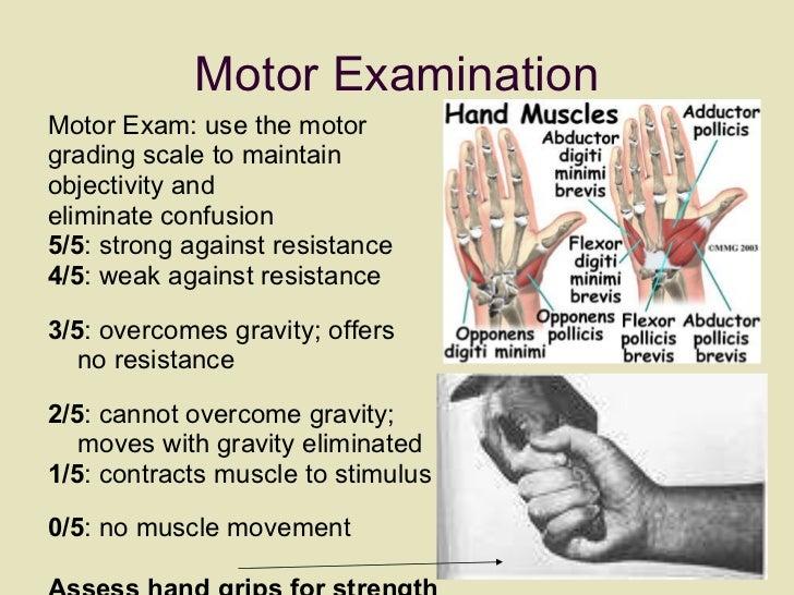 Motor Examination <ul><li>Motor Exam: use the motor  </li></ul><ul><li>grading scale to maintain  </li></ul><ul><li>object...