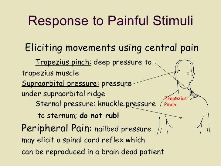 Response to Painful Stimuli <ul><li>Eliciting movements using central pain Trapezius pinch:  deep pressure to  trapezius m...