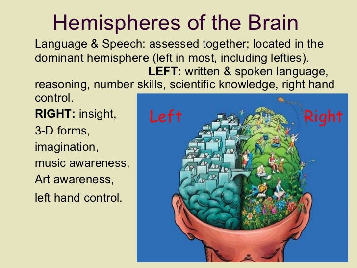 Hemispheres of the Brain <ul><li>Language & Speech: assessed together; located in the dominant hemisphere (left in most, i...