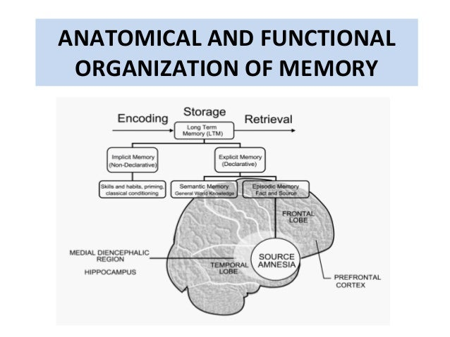 Anatomy of memory