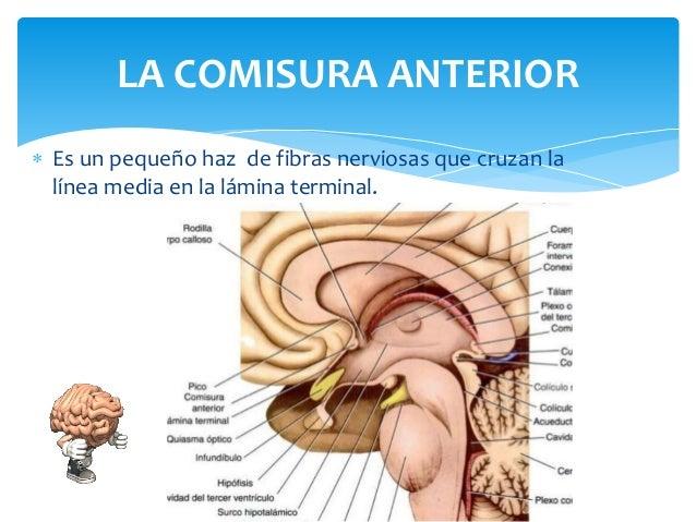 El Cerebro, cap 7