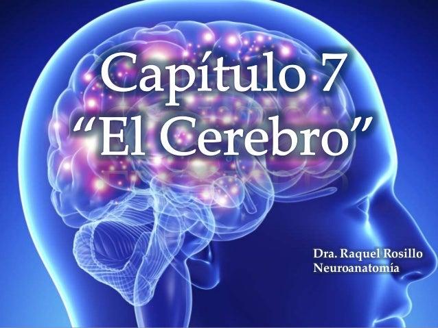 Dra. Raquel Rosillo Neuroanatomía
