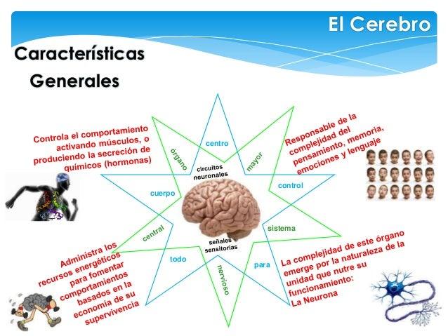 Características El Cerebro Generales centro sistema control cuerpo para todo