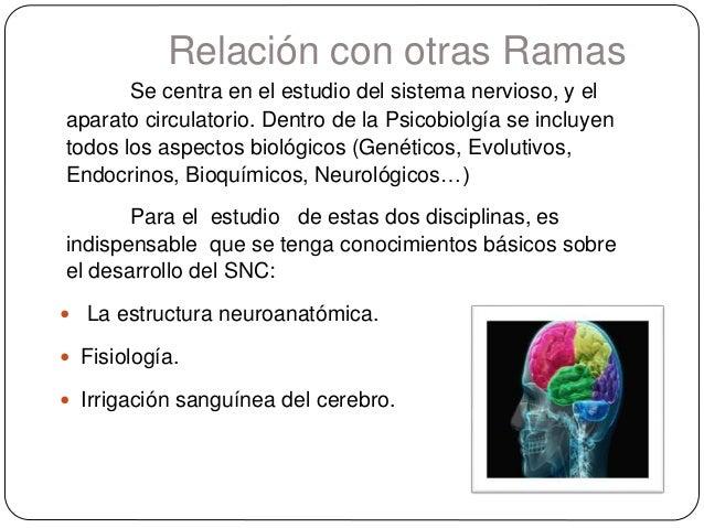 Relación con otras Ramas Se centra en el estudio del sistema nervioso, y el aparato circulatorio. Dentro de la Psicobiolgí...
