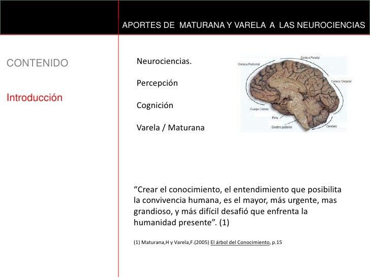 APORTES DE  MATURANA Y VARELA  A  LAS NEUROCIENCIAS<br />Neurociencias.<br />Percepción <br />Cognición<br />Varela / Matu...