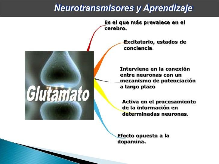 Neurociencias en el aula Slide 30