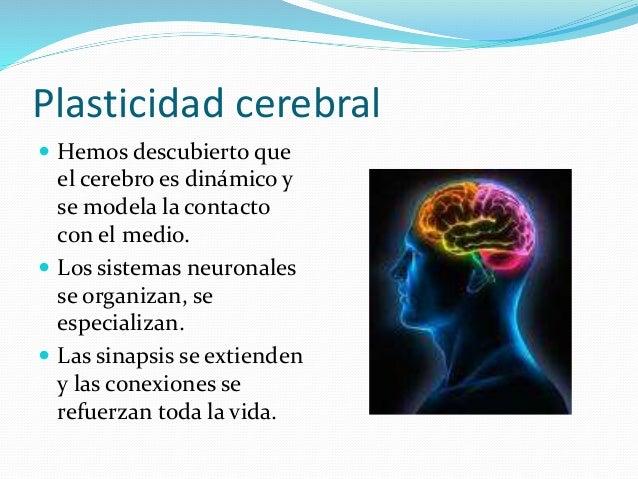 Neurociencias y educación Slide 3