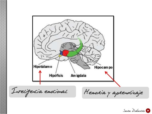 La parte emocional es la que más influye en el funcionamiento del cerebro  ¿Cómo se desarrolla el método Más sobre ti? Ana...