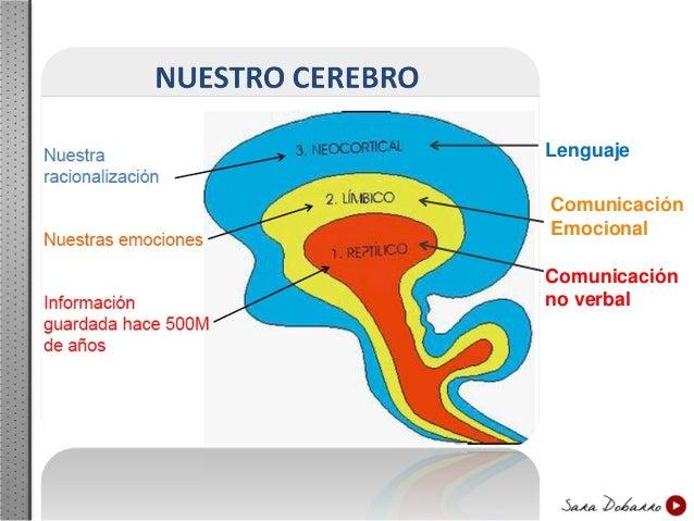 3. Cerebro Neocortical Es la zona del conocimiento. El lenguaje, las matemáticas, la geografía… todo lo que aprendemos lo ...