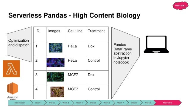 NeuroDB Serverless Pandas - High Content Biology ID Images Cell Line Treatment 1 HeLa Dox 2 HeLa Control 3 MCF7 Dox 4 MCF7...