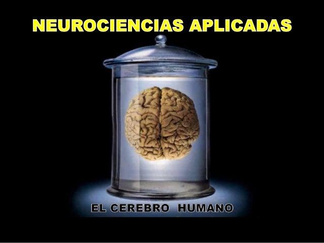 Neuro educacion Slide 1