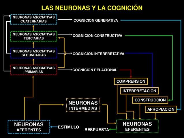 Neuro educacion Slide 40