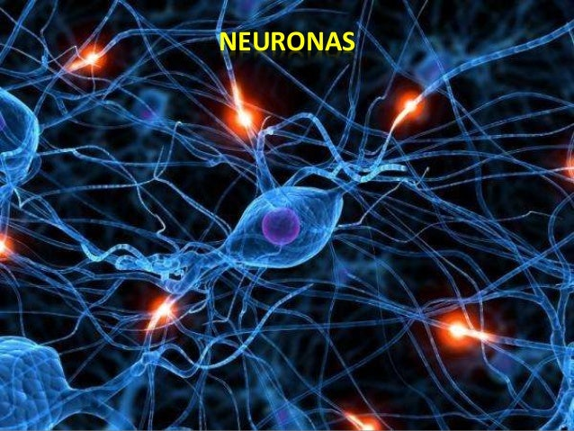 PLASTICIDAD CEREBRAL • LA NEUROBIOLOGÍA demostró que el cerebro se modifica en su estructura por un fenómeno neurobiológic...