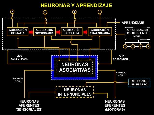 Neuro educacion Slide 42