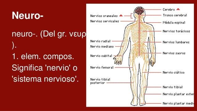 40,000 neuronas en el corazón 1,000,000 neuronas de la retina 12,000,000 en los receptores olfatorios 100,000,000 en la mé...