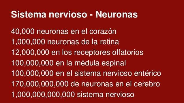 Cerebro: Especificaciones técnicas 170,000,000,000 de células de las cuales 86,000,000,000 son neuronas de las cuales 69,0...