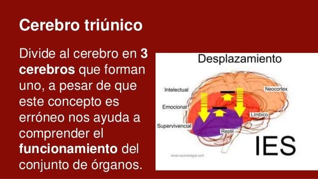 Límbico ● Sustancia blanca. ● Sentimientos. ● Compuesto por: Amígdala, Hipotálamo, Hipocampo ● Funciones: Emociones y recu...