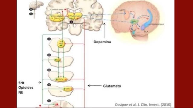 Estrés fisiológico Algunas de las actividades que generan estrés fisiológico son: ● Despertarse: se activa por el estrés. ...