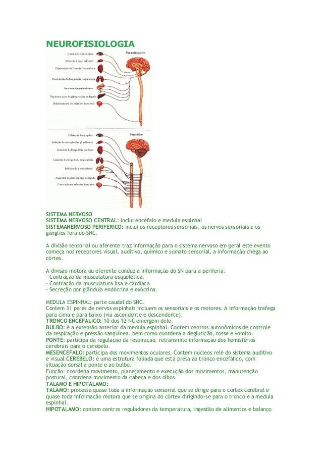 NEUROFISIOLOGIA SISTEMA NERVOSO SISTEMA NERVOSO CENTRAL: inclui encéfalo e medula espinhal SISTEMANERVOSO PERIFERICO: incl...