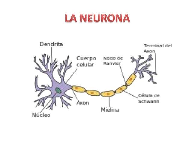 Neurofisiologia Presentación