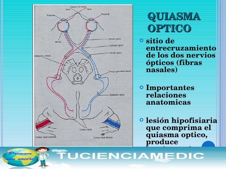 Neuroftalmologia FMH UNPRG Tucienciamedic