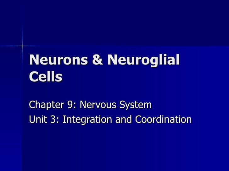 Neurons & Neuroglial Cells Chapter 9: Nervous System Unit 3: Integration and Coordination