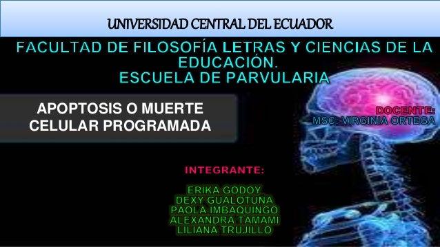 APOPTOSIS O MUERTE CELULAR PROGRAMADA UNIVERSIDADCENTRAL DEL ECUADOR