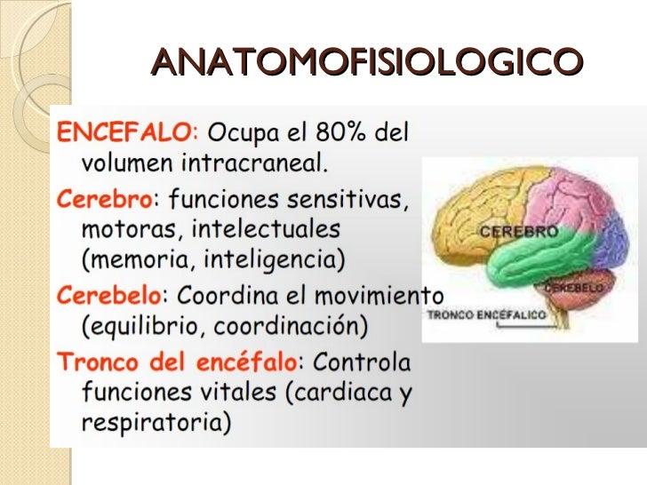 ANATOMOFISIOLOGICO