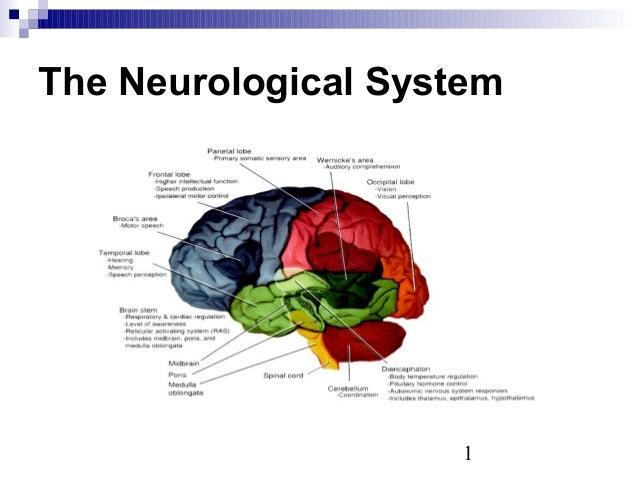 1 The Neurological System