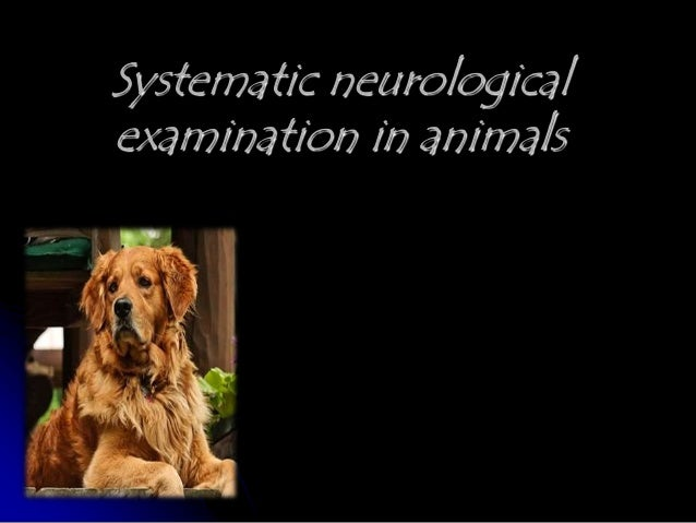 Neurological examination of vety patient