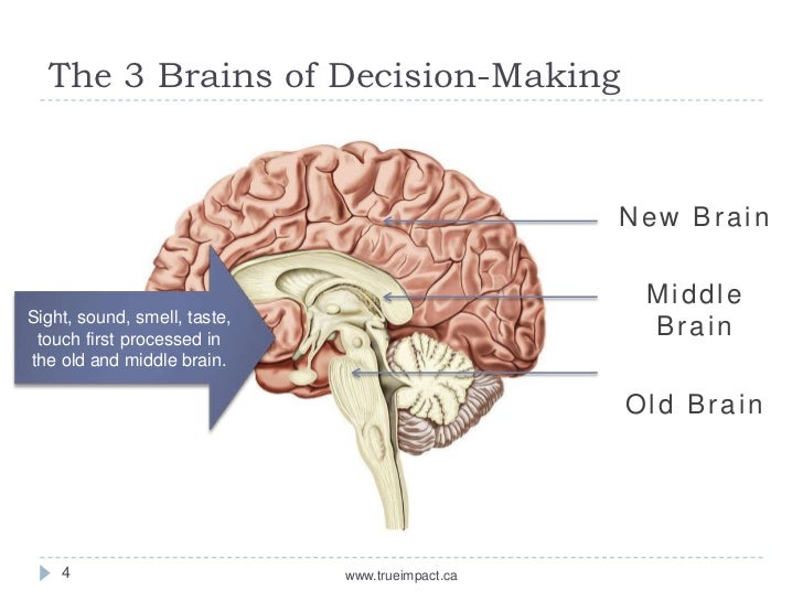 an overview of the decision making process of human beings Making: rational, psychological, and neurological models  in a rational decision-making process,  human beings have a preference for simplicity.