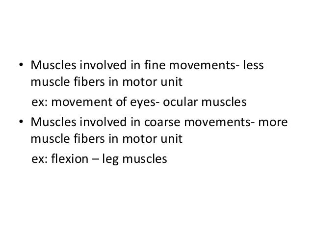 • Muscles involved in fine movements- less muscle fibers in motor unit ex: movement of eyes- ocular muscles • Muscles invo...