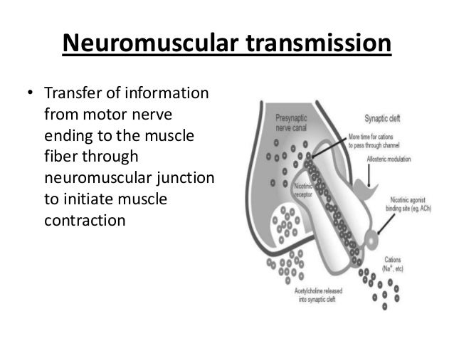 Neuromuscular transmission • Transfer of information from motor nerve ending to the muscle fiber through neuromuscular jun...