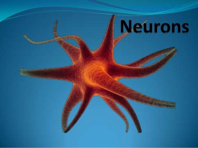 Central Nervous System (CNS) Brain Spinal Cord Peripheral Nervous System (PNS) Sensory NeuronsMotor Neurons Somatic Nervou...