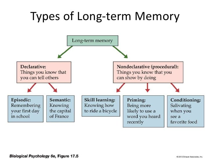 Types of Long Term Memory