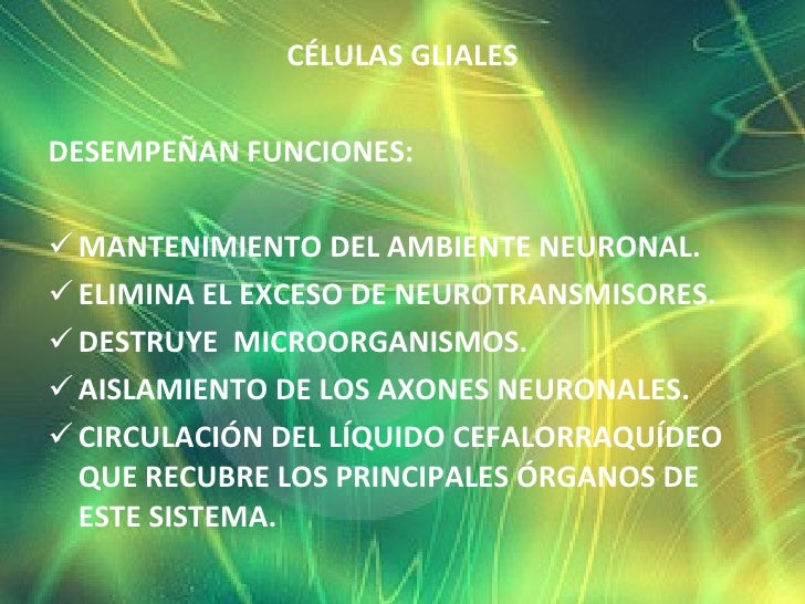 <ul><li>CÉLULAS GLIALES </li></ul><ul><li>DESEMPEÑAN FUNCIONES:  </li></ul><ul><li>MANTENIMIENTO DEL AMBIENTE NEURONAL.  <...