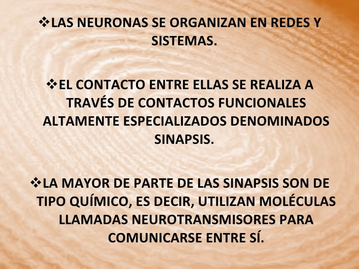 <ul><li>LAS NEURONAS SE ORGANIZAN EN REDES Y SISTEMAS.  </li></ul><ul><li>EL CONTACTO ENTRE ELLAS SE REALIZA A TRAVÉS DE C...