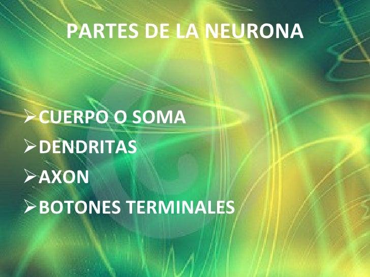 <ul><li>PARTES DE LA NEURONA </li></ul><ul><li>CUERPO O SOMA </li></ul><ul><li>DENDRITAS </li></ul><ul><li>AXON </li></ul>...